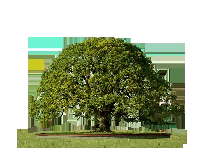 Tree PNG Transparent Images.