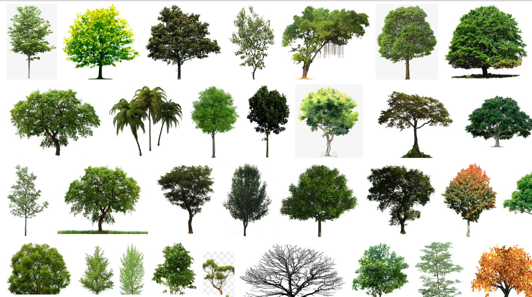 Tree Png] All Tree Png Download Now in One Click to Zip File No.