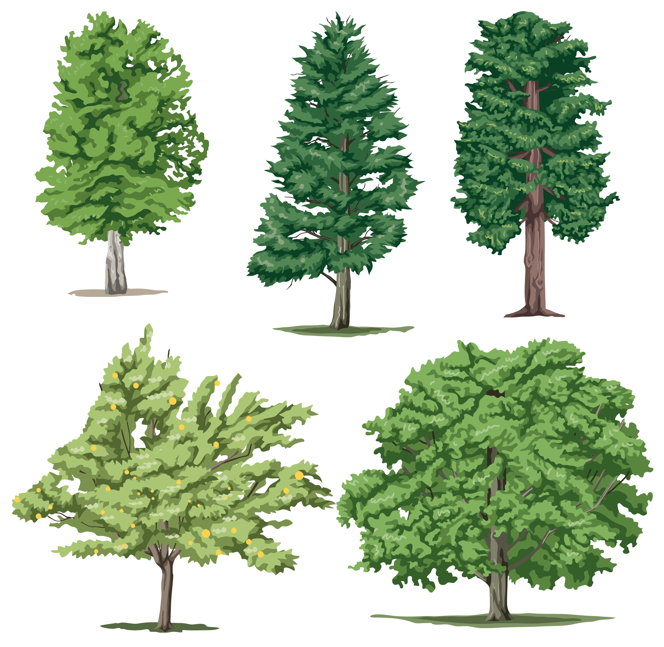 Tree Png Cartoon Realistic Trees All Types.