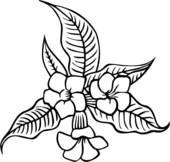Clipart of , allamanda, flower, varieties, u18104855.