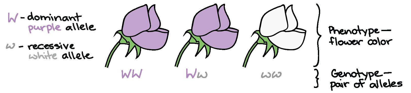 Seedling clipart autotroph, Seedling autotroph Transparent.
