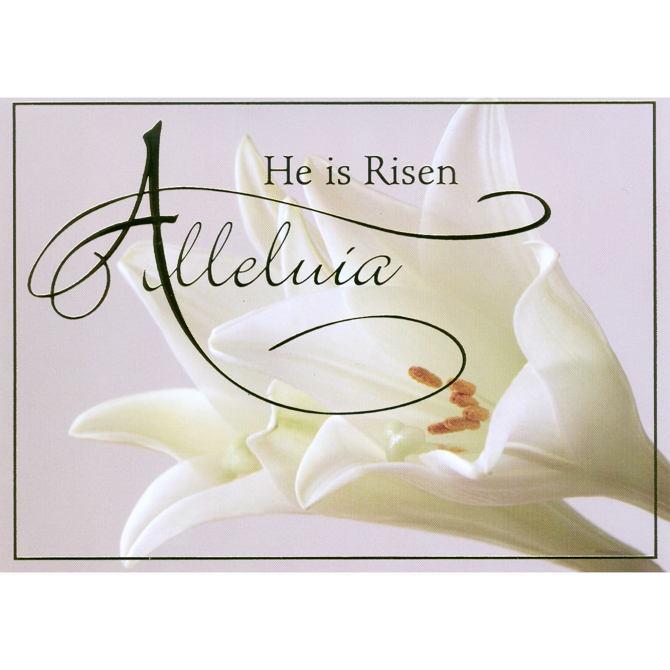 Alleluia Easter Boxed Cards.