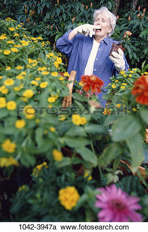 Stock Photography of people, plants, woman, senior, flowers.