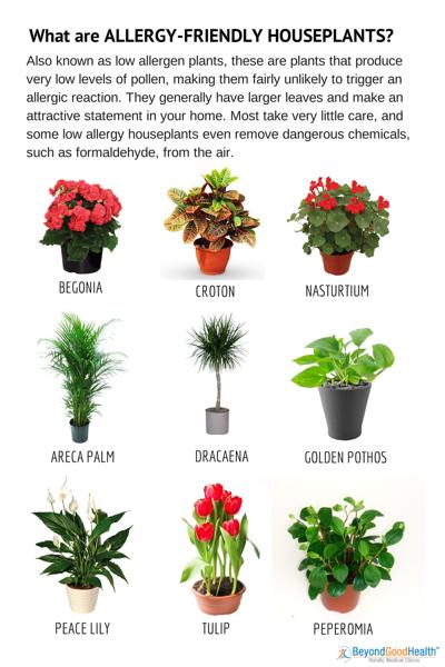 14 Effective Home Remedies to Control Indoor Allergens.
