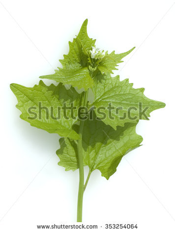 Mustard Plant Stock Images, Royalty.