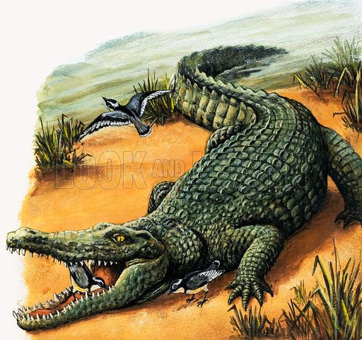 Crocodile and plover, picture, image, illustration in 2019.