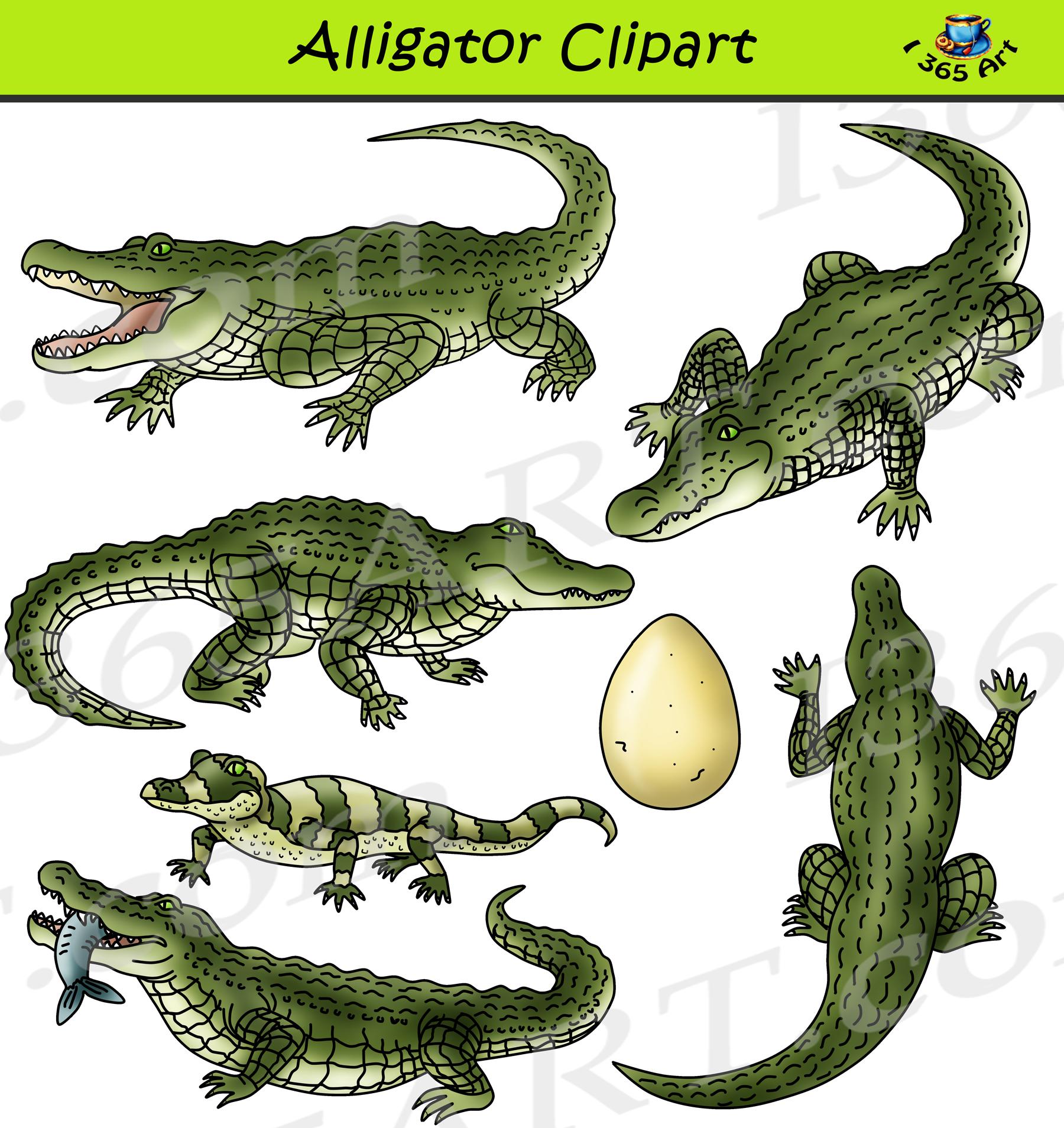 Alligator Clipart Set Graphics Download.