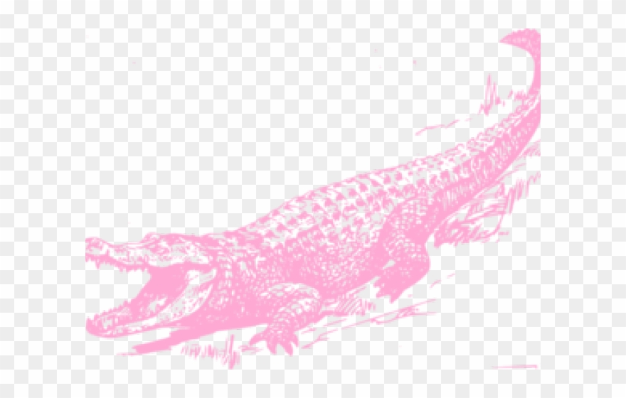 Alligator Clipart Name.