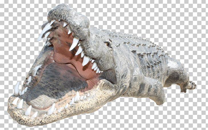 Crocodile Alligators Desktop PNG, Clipart, Alligato, Alligator.