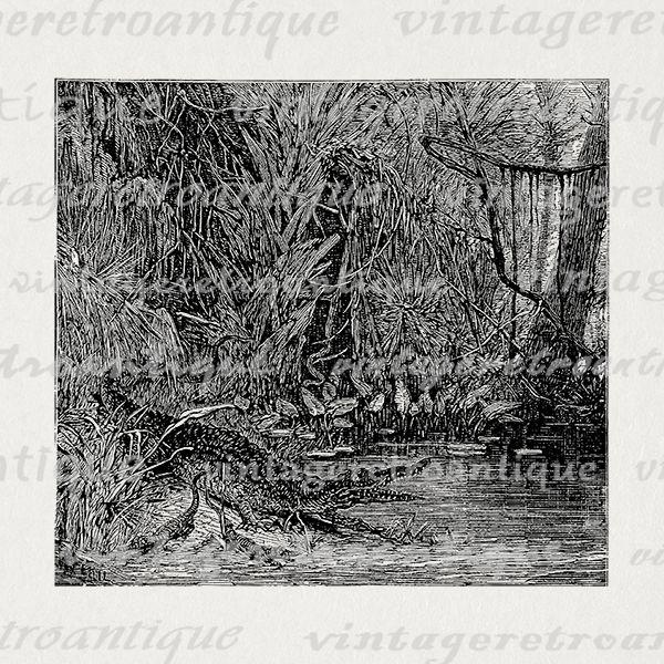 Alligator Swamp Cliparts.