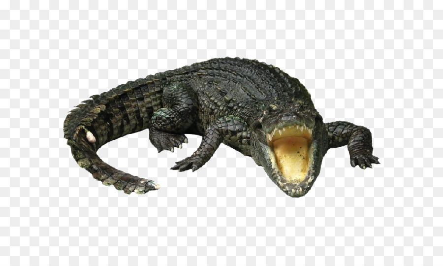 Alligator Cartoon png download.