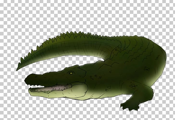 Crocodiles Alligator Saltwater Crocodile Painting Drawing PNG.