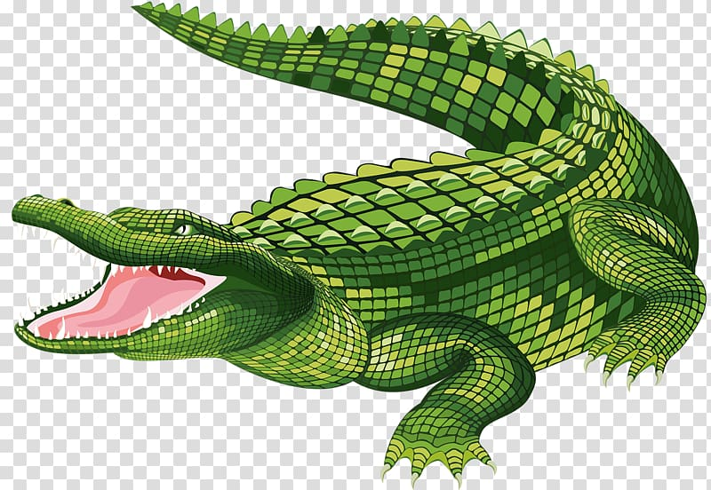 Green crocodile , the Crocodile Alligator , Crocodile mouth.