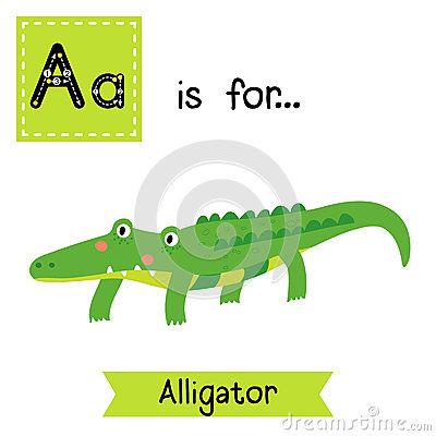Alligatoridae Stock Illustrations.