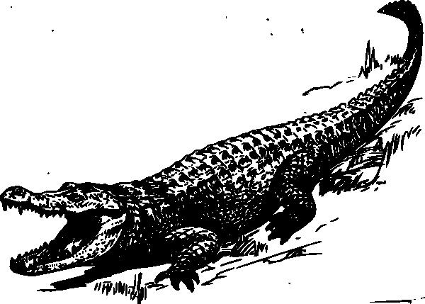 Alligator Outline Clipart.