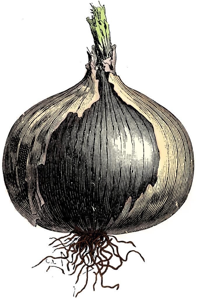 Superfood Sundays: Onions (allium cepa) — Bloom.