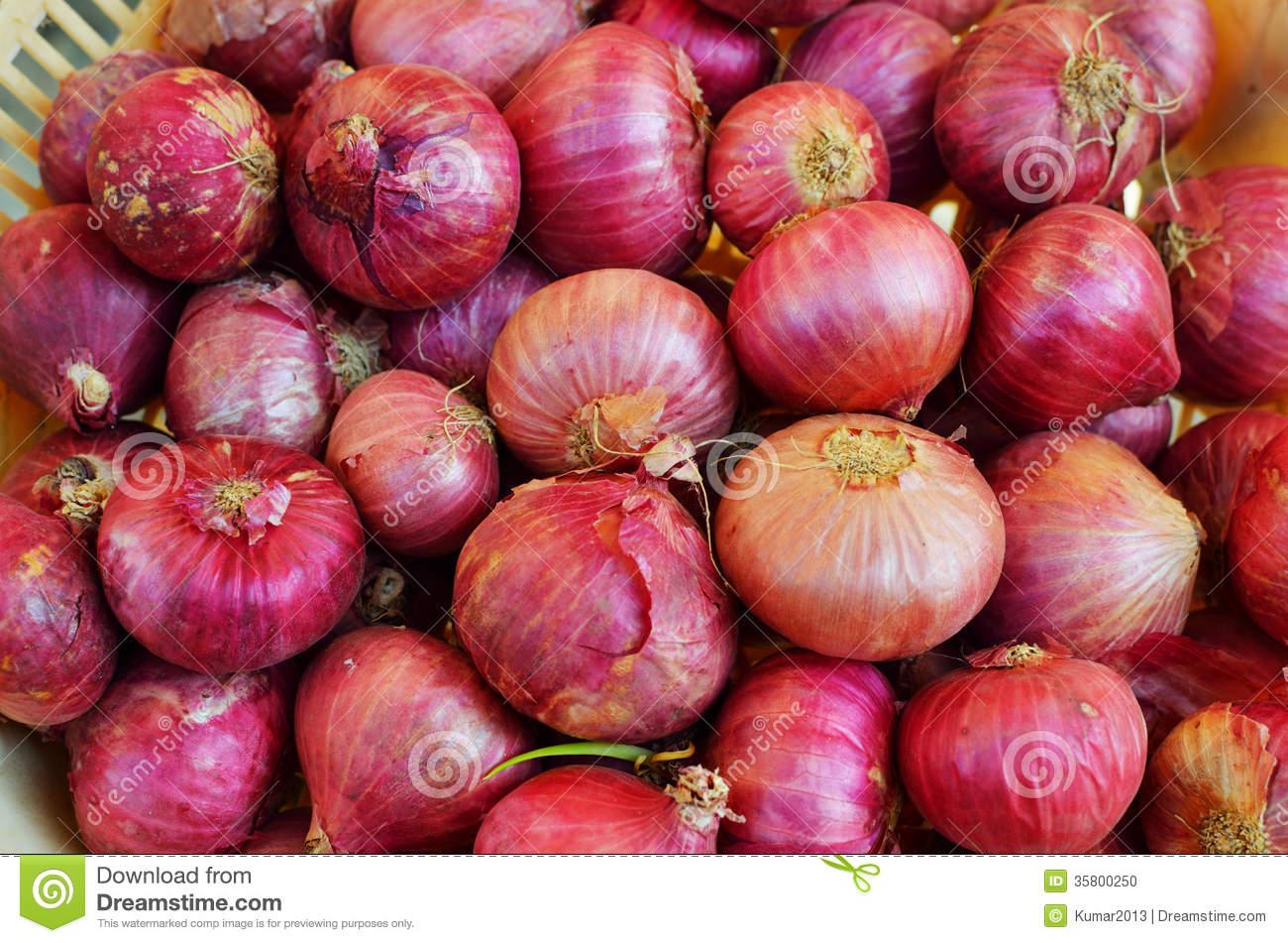 Onion Or Allium Cepa Stock Photo.