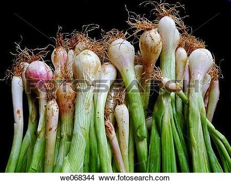 Allium cepa Images and Stock Photos. 2,281 allium cepa photography.