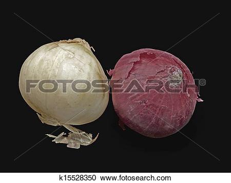 Stock Photography of Onion, Allium cepa k15528350.