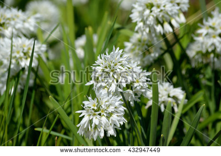 West Of France White Stock Photos, Images, & Pictures.