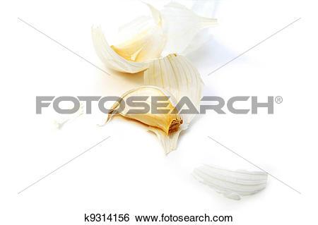 Stock Images of Allium sativum k9314156.