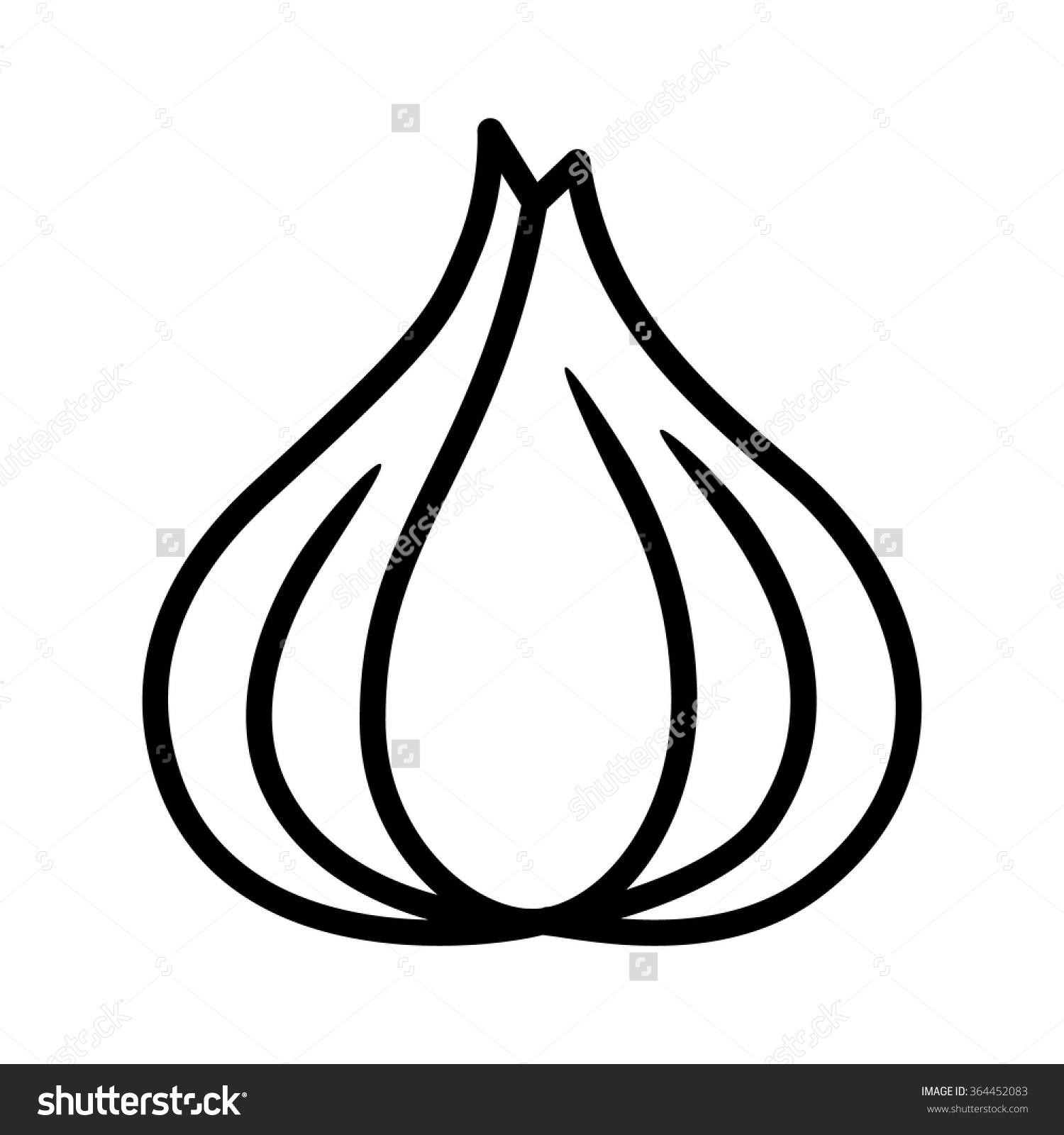 Garlic Bulb Allium Sativum Line Art Stock Vector 364452083.