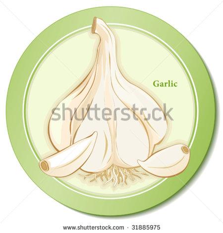 Allium Sativum Stock Vectors & Vector Clip Art.
