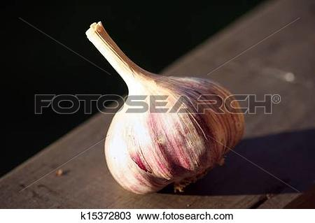 Stock Photo of Allium sativum, commonly known as garlic k15372803.