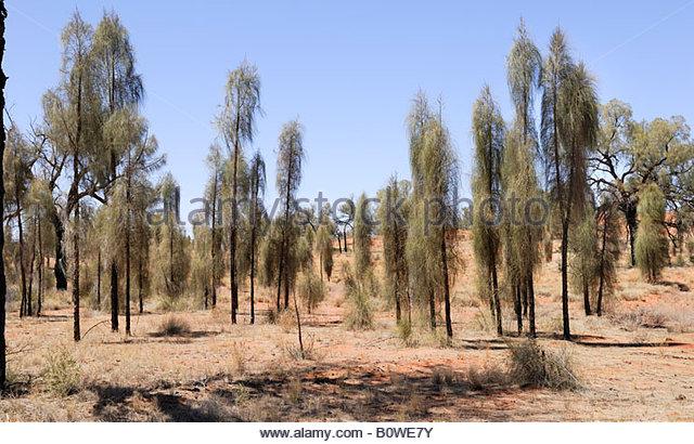 Desert Forestry Stock Photos & Desert Forestry Stock Images.