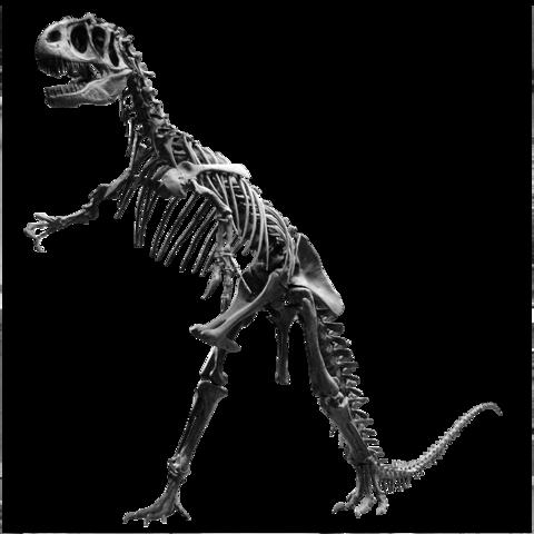 File:Allosaurus Jardin des Plantes.png.