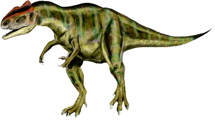 Allosaurus 2.png.