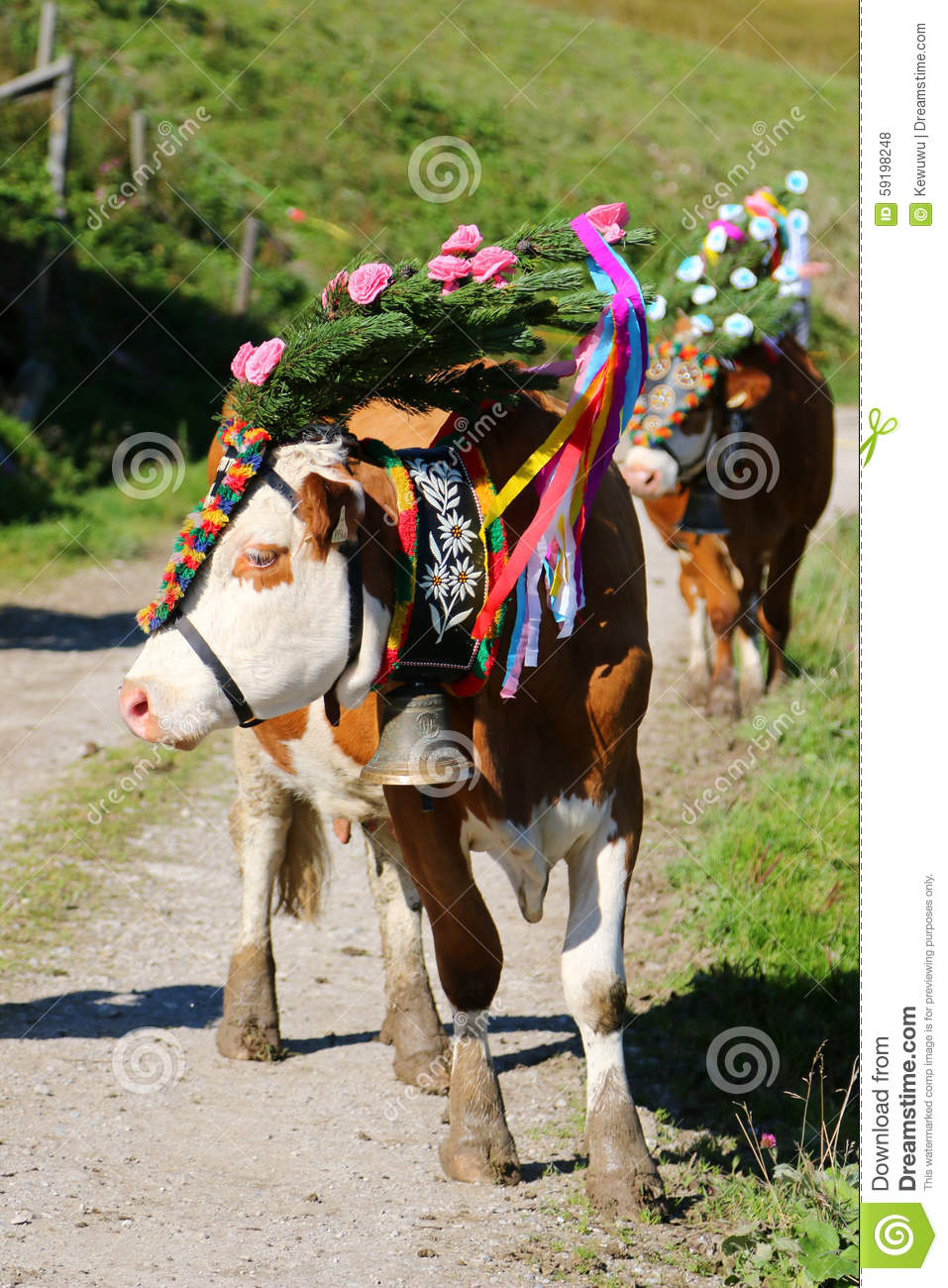 Austrian Cows With A Headdress During A Cattle Drive In Tyrol.
