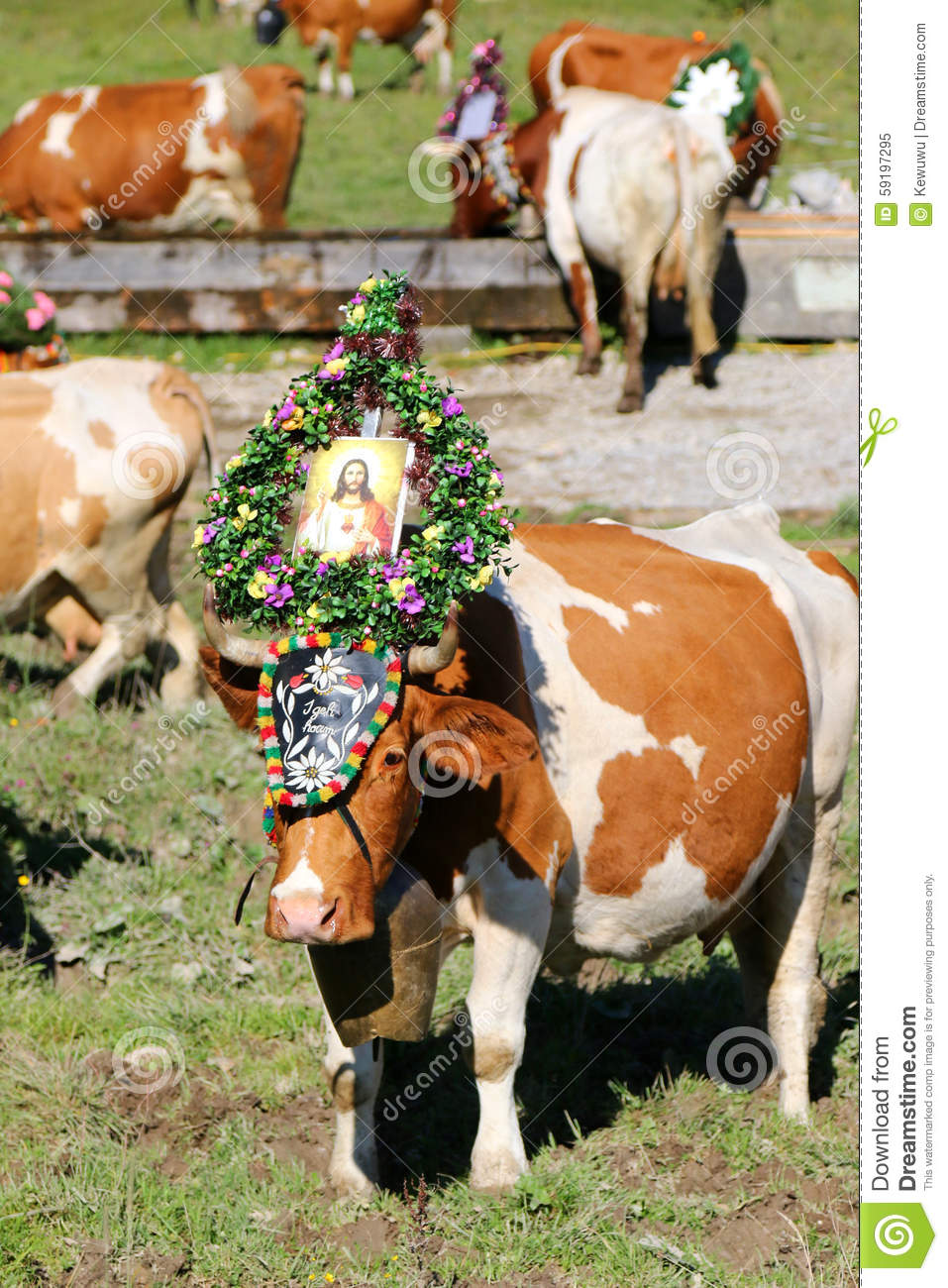 Austrian Cow With A Headdress During A Cattle Drive In Tyrol.