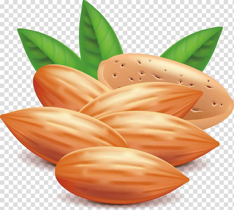 Almond Nut Euclidean , almond transparent background PNG.