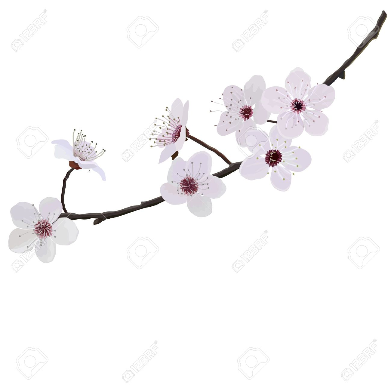 Flower Almonds Royalty Free Cliparts, Vectors, And Stock.