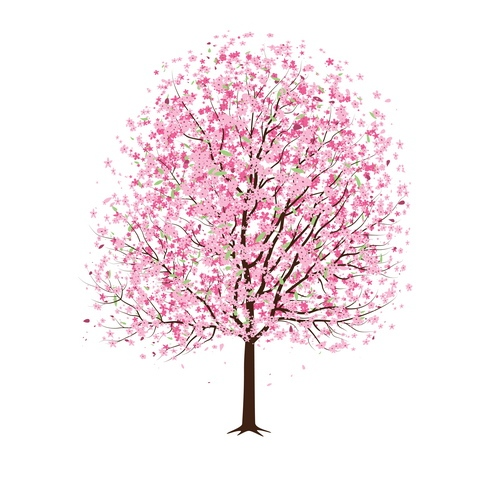 Japanese cherry blossoms clipart #14