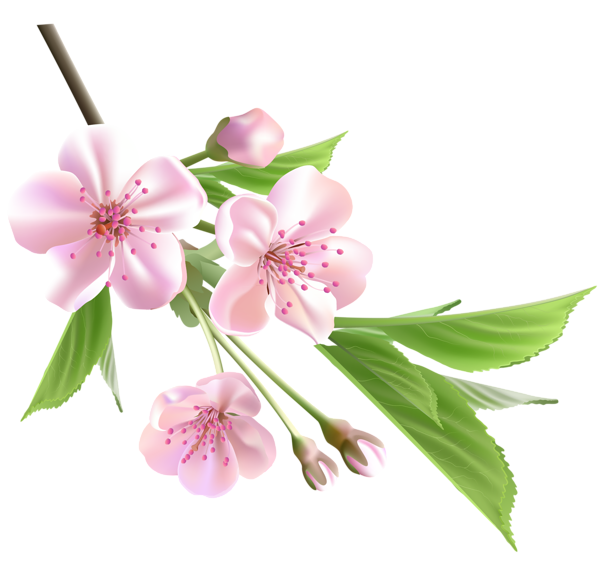 Tree flower bud clipart.