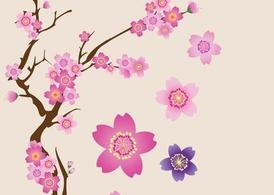Cherry Blossoms, Vector Image.