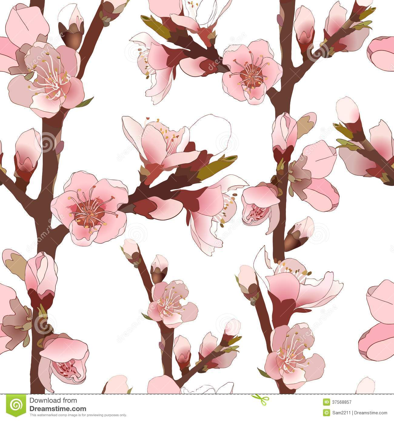 Cherry Almond Blossom Stock Illustrations.