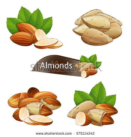 almond bowl clipart clipground