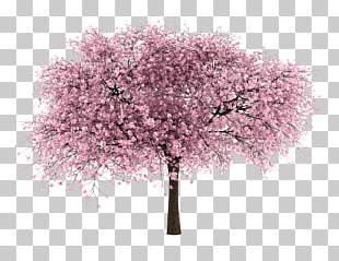 503 almond Tree PNG cliparts for free download.