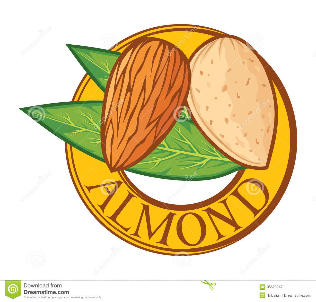 almond clipart clipground