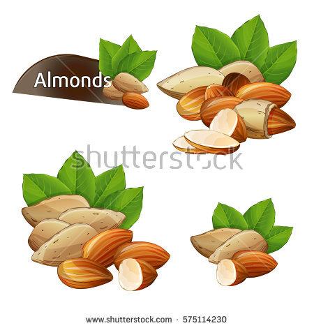 Almond Stock Vectors, Images & Vector Art.
