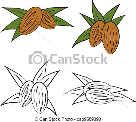Almond Clipart and Stock Illustrations. 1,810 Almond vector EPS.