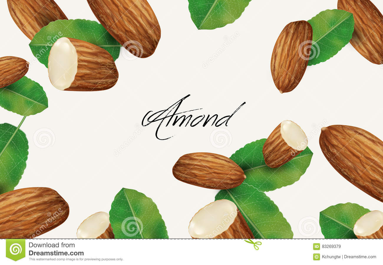Almond And Leaf Element Stock Illustration.