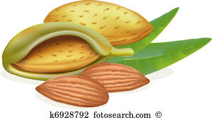 Almond leaves Clip Art Royalty Free. 219 almond leaves clipart.