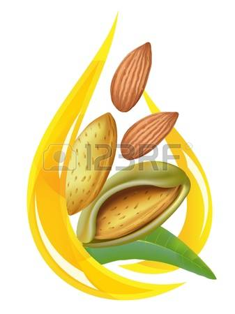 Almond Leaf Stock Illustrations, Cliparts And Royalty Free Almond.