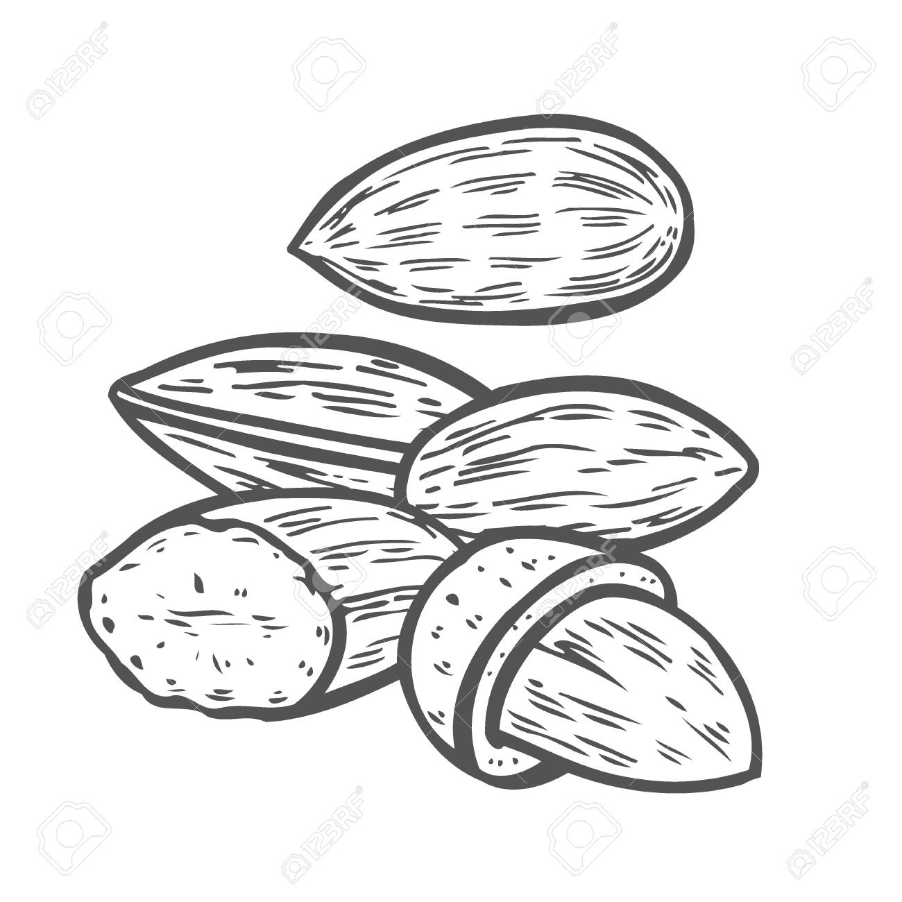 Almond nut seed vector. Isolated on white background. Almond...