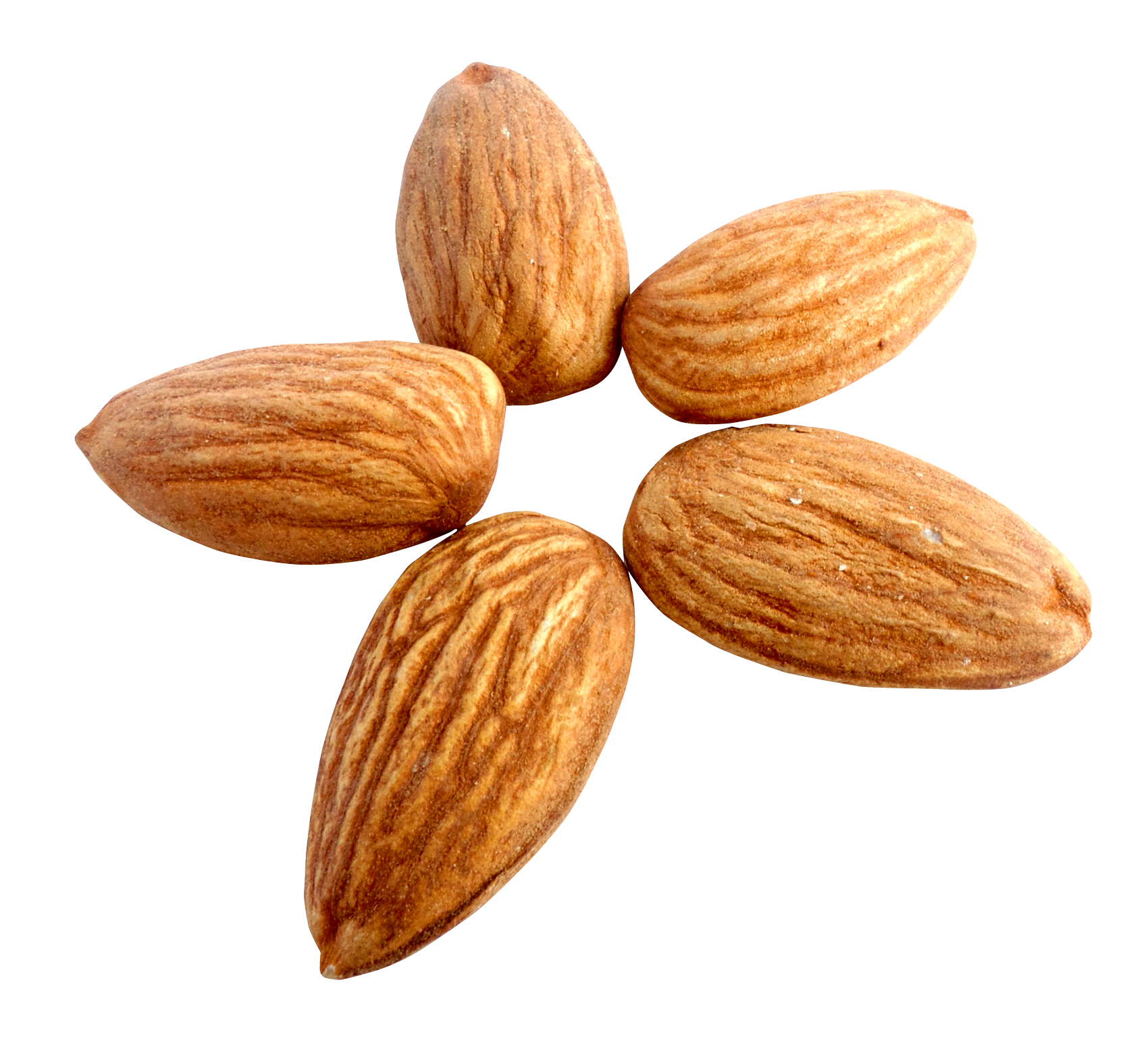 Almond Transparent Background.