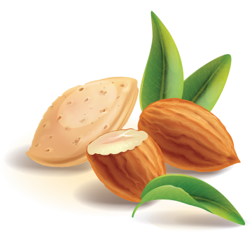 Almond Png, Vector, PSD, and Clipart With Transparent Background for.